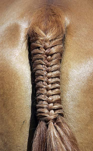 Fryzury Na Końskim Ogonie Jeździectwo Konie Forum