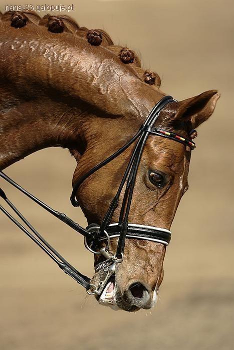 Końskie Fryzury Koreczki Jeździectwo Konie Galopujepl