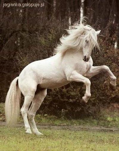 Wiersze O Koniach Jeździectwo Konie Galopujepl