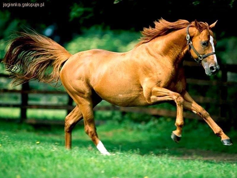 Przysłowia Związane Z Końmi Jeździectwo Konie Galopujepl