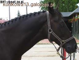 Końskie Fryzury Część I Jeździectwo Konie Galopujepl