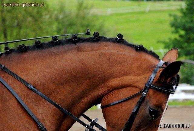 Fryzura Konia Zaplatamy Koreczki Jeździectwo Konie